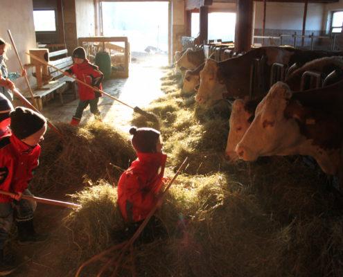 Kinder füttern Kühe