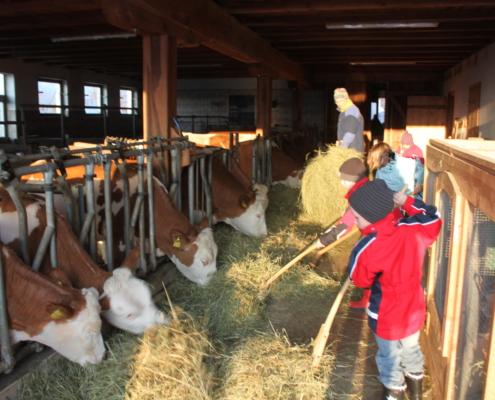 Kinder füttern Kühe im Stall